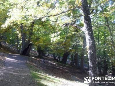 El Castañar de El Tiemblo , Un bosque mágico;ruta por patones;plano de la pedriza